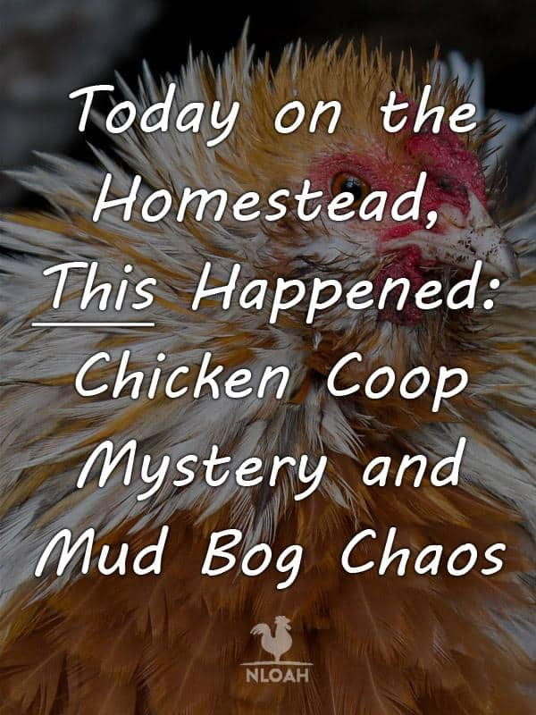 today on the_homestead chicken coop pt 2 pinterest
