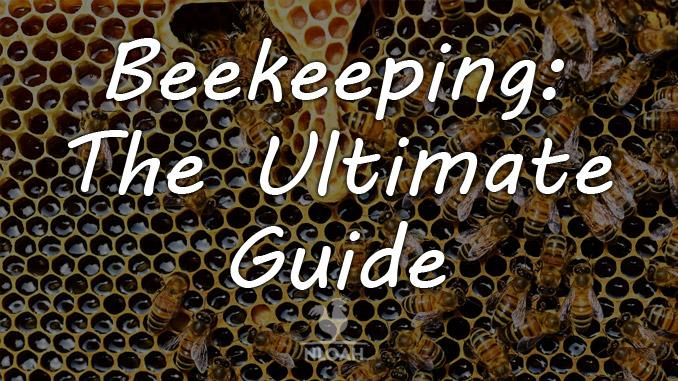beekeeping featured