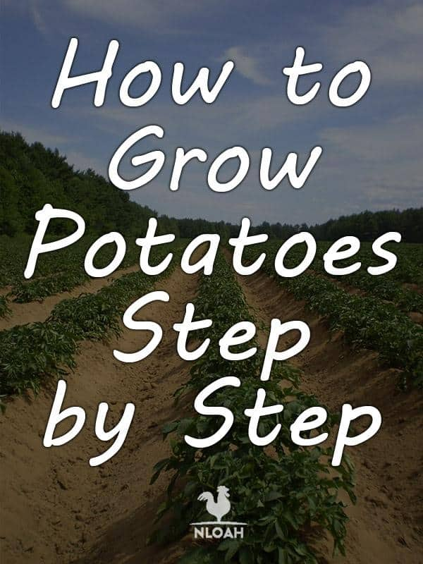 growing potatoes pinterest