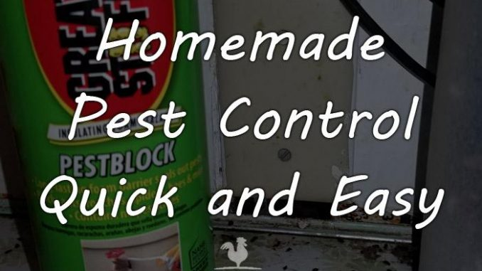 homemade pest control featured