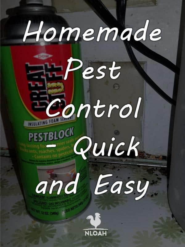 homemade pest control pinterest