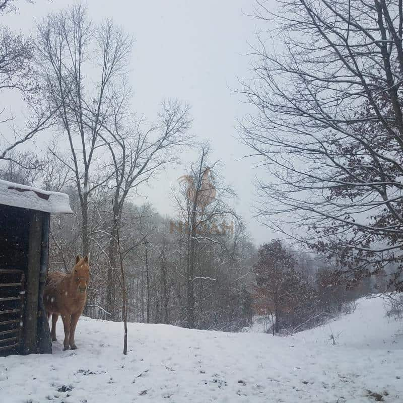 horse in snow by the barn