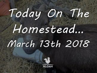 today on the homestead march 13 featured