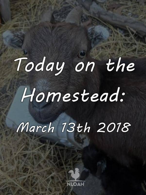 today on the homestead march 13 pinterest