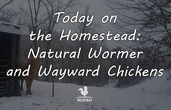 today on the homestead natural wormer featured