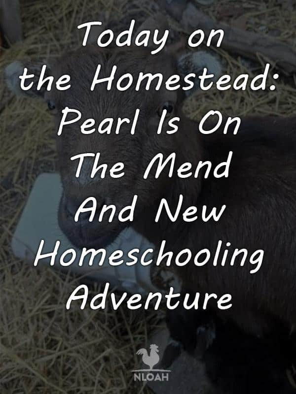 today on the homestead_pearl on the mend pinterest