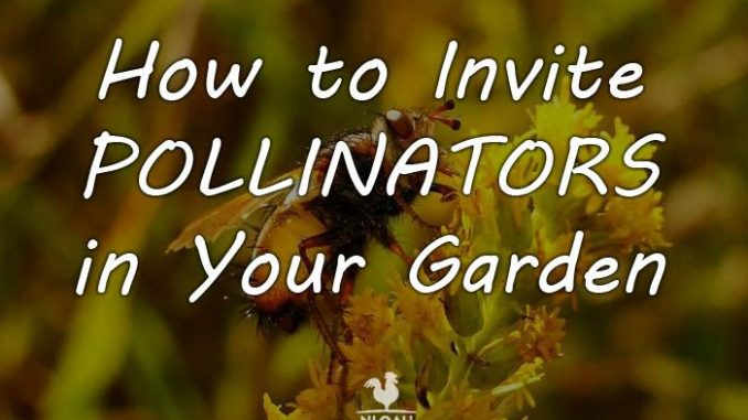 attracting pollinators featured