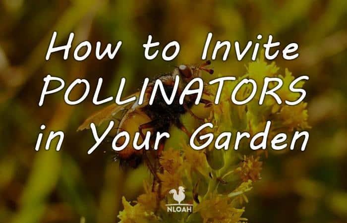 attracting pollinators featured