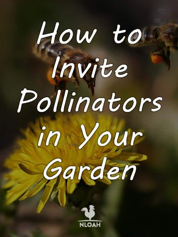 attracting pollinators pinterest