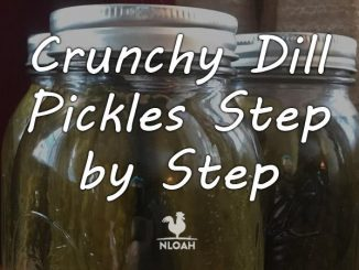 crunchy dill pickles featured