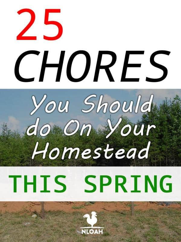 homesteading spring chores pinterest