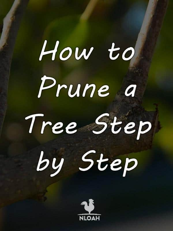 how to prune a tree pinterest