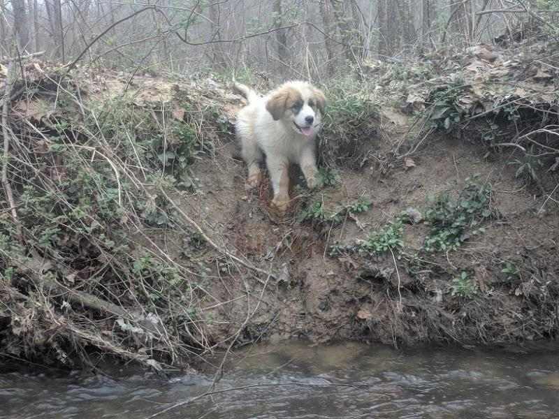sasha the dog afraid of going into creek