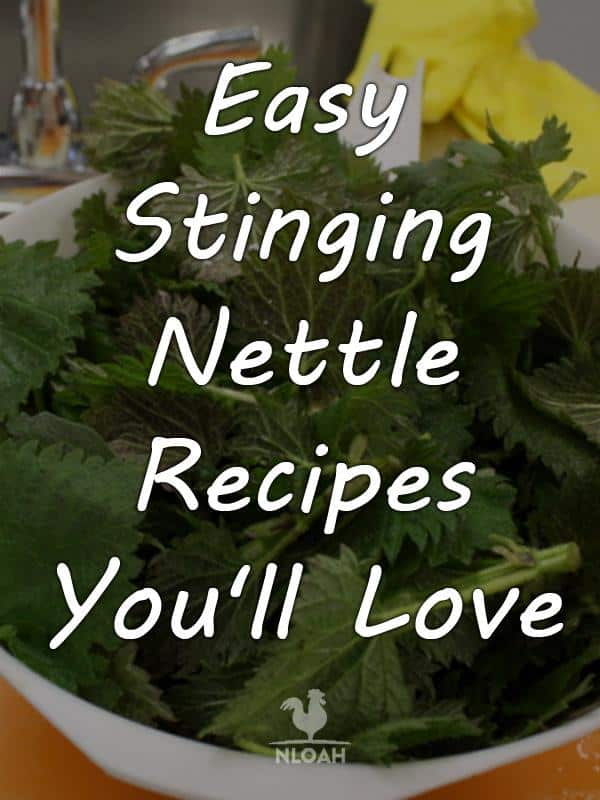 stinging nettle recipes pinterest