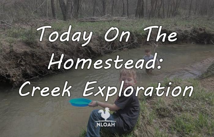 today on the homestead creek exploration featured