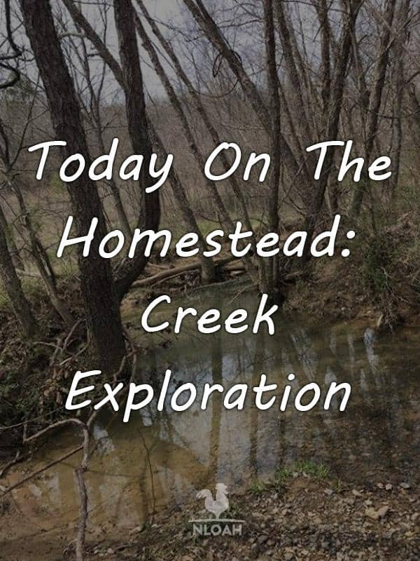 today on the homestead creek exploration pinterest
