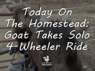 today on the homestead_goat solo 4 wheel drive featured