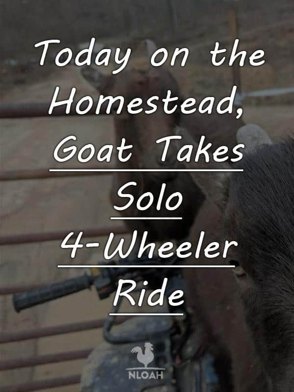 today on the homestead_goat solo 4 wheel drive pinterest