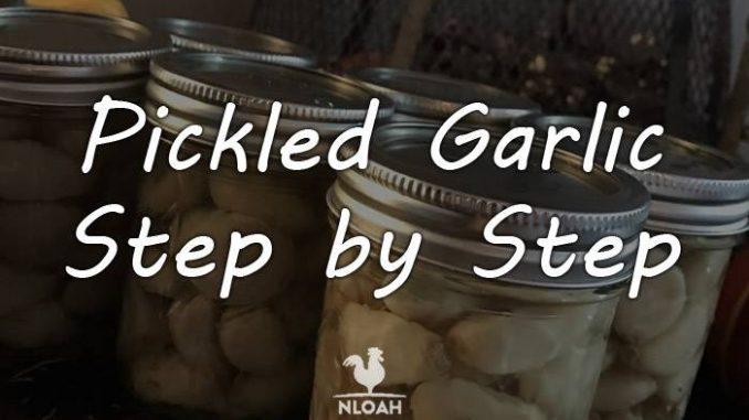 how to pickle garlic logo