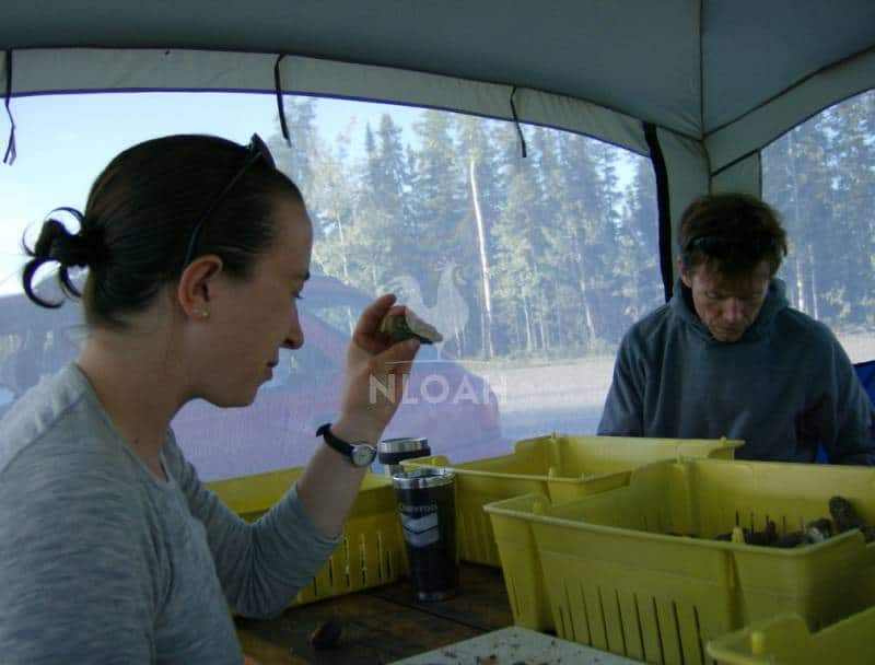 Commercial foragers examine morels for quality