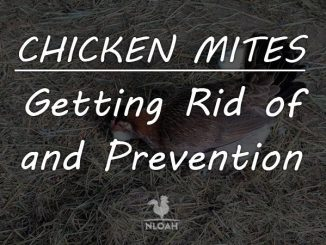chicken mites logo