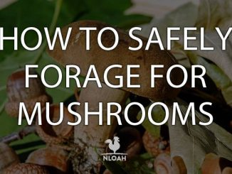 mushroom foraging logo