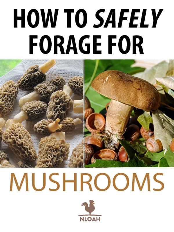 mushroom foraging pinterest