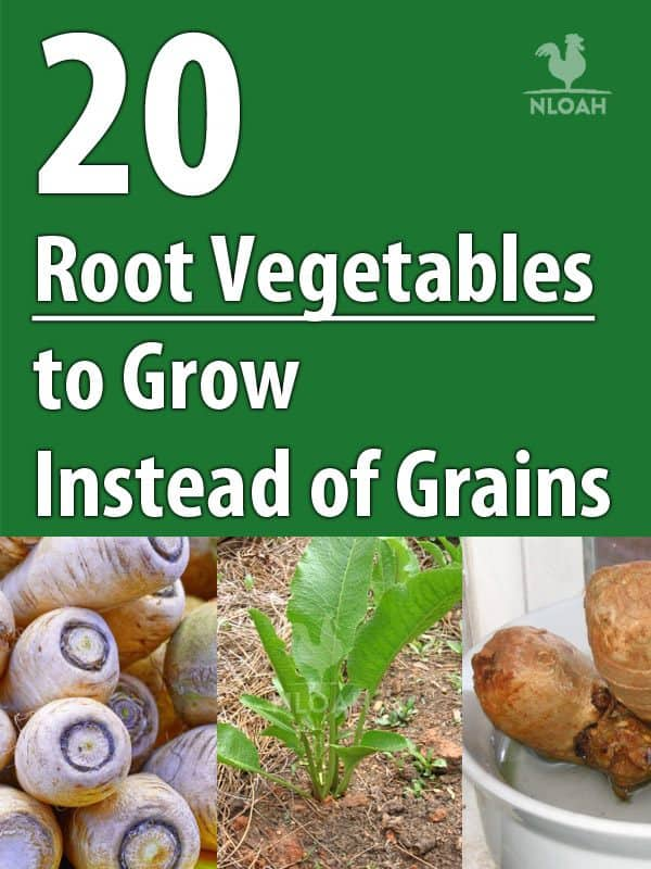 root vegetables pinterest