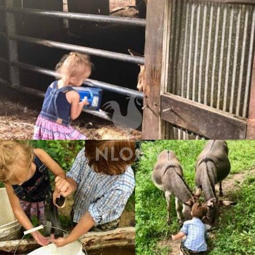 children feeding animals collage