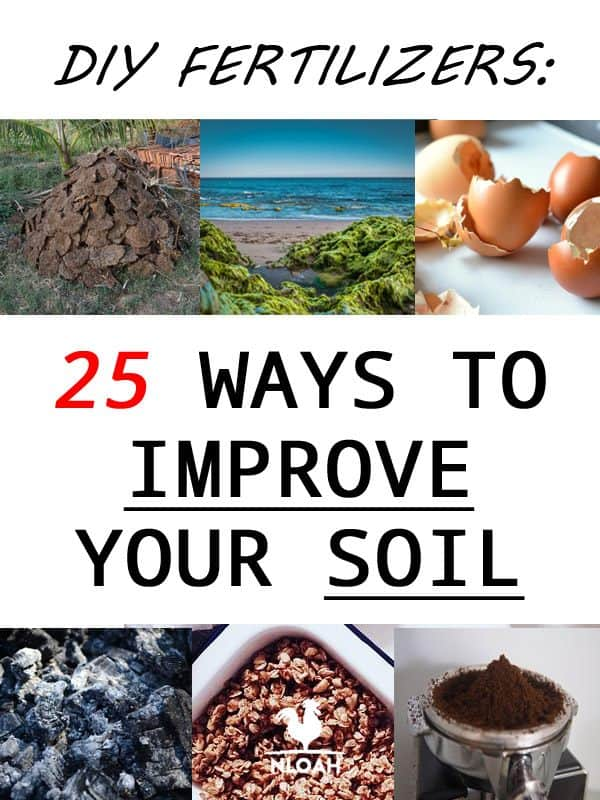 diy fertilizers pinterest