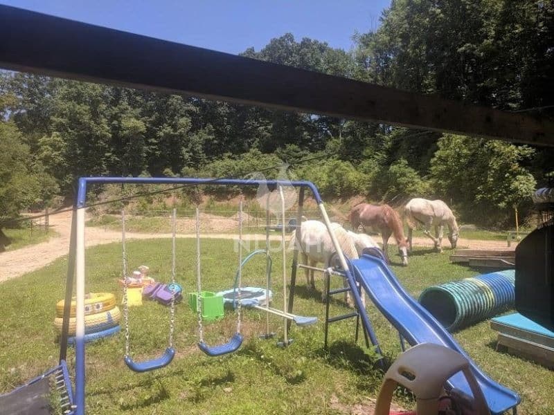free-ranging horses on the playground