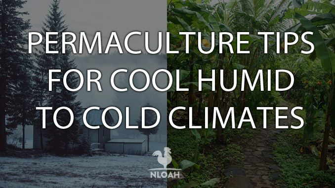 permaculture 101 cover