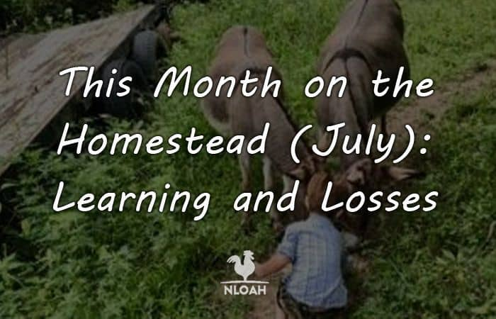this month on the homestead july 2018 featured