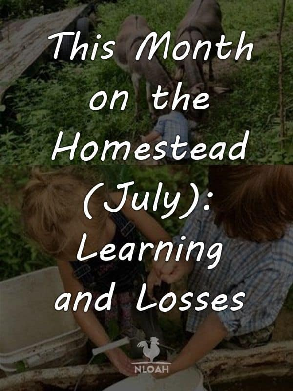 this month on the homestead july 2018 pinterest