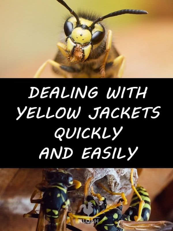 yellowjackets pinterest
