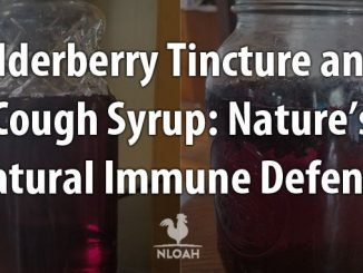 elderberry tincture syrup cover