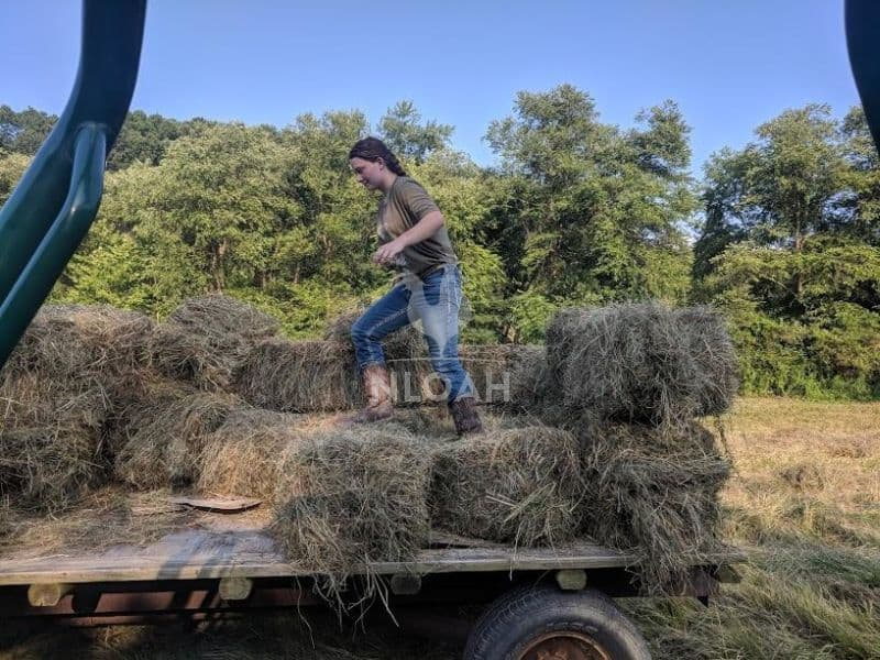 girl in trailer on top of hay bales