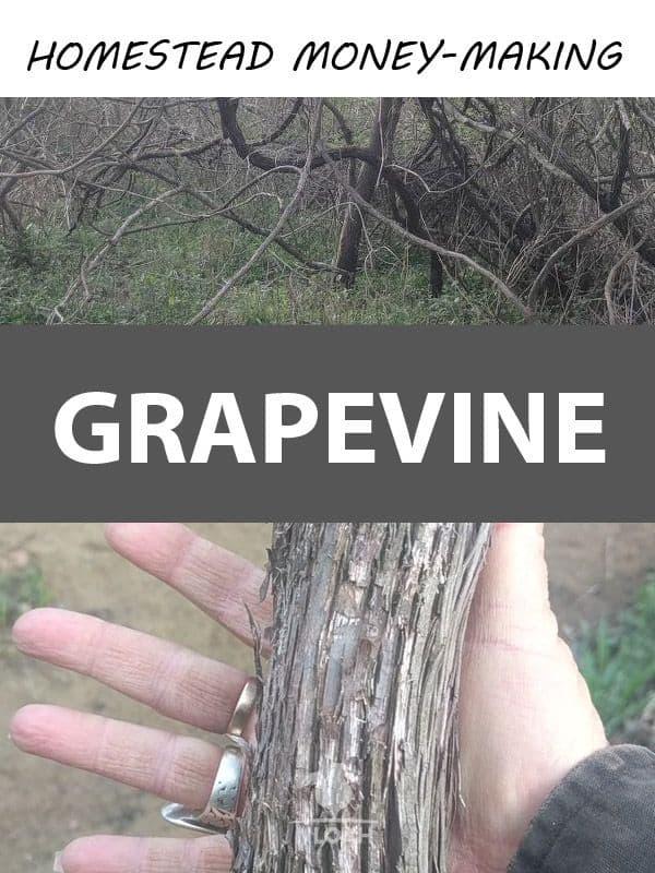grapevine pinterest