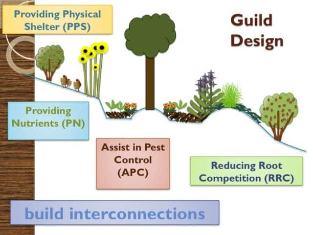 guild design diagram