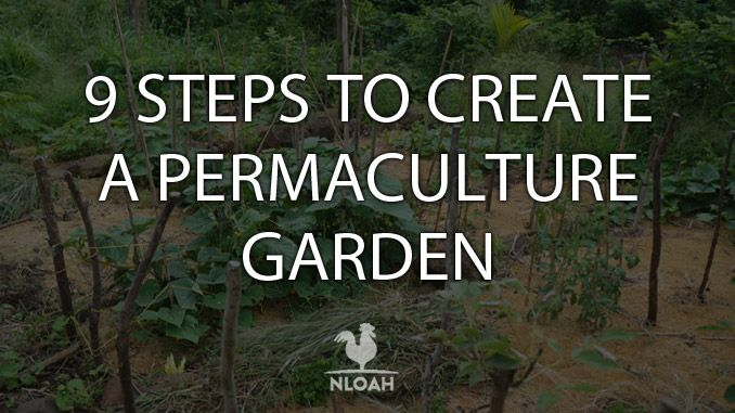permaculture steps cover