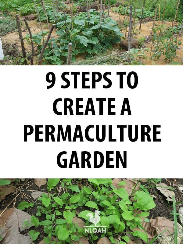 permaculture steps pinterest