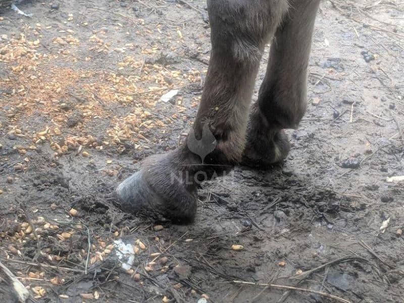 a horse's hoof