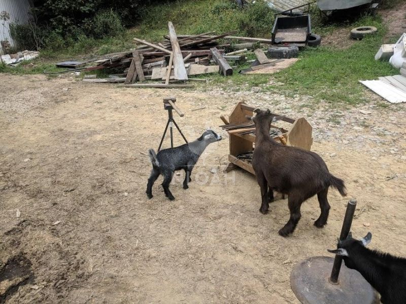 animals checking out horse shoeing tools