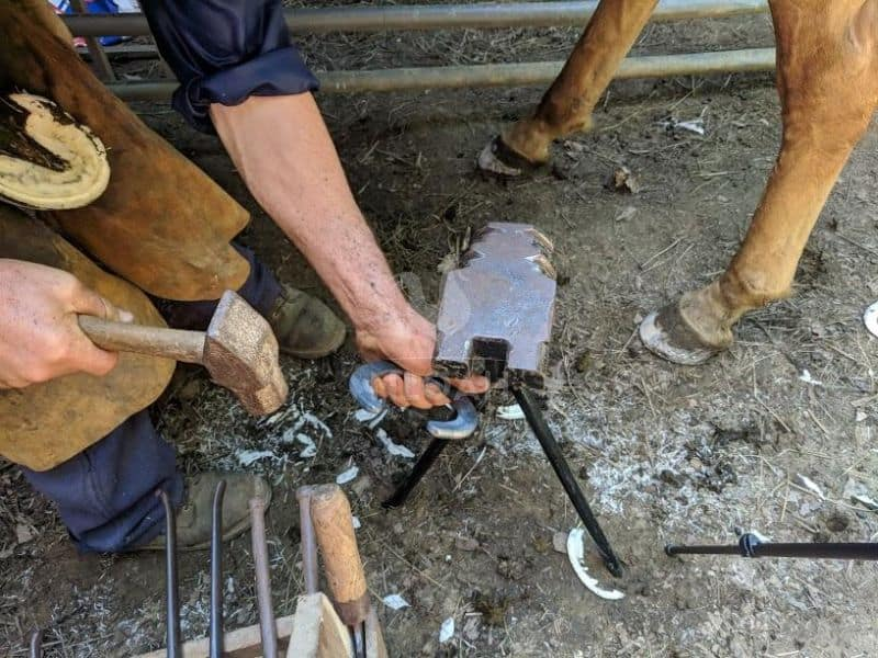 horse shoeing tools in action