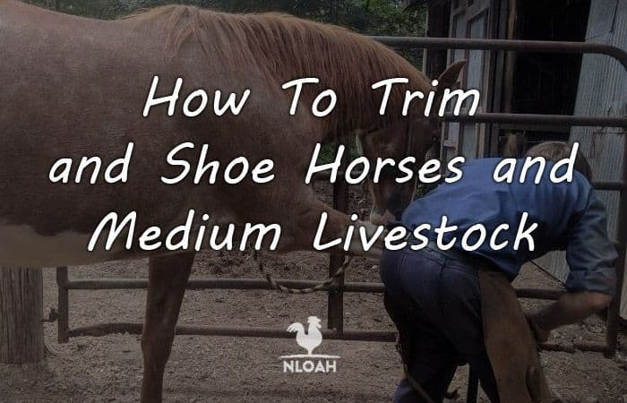 how to shoe a horse logo