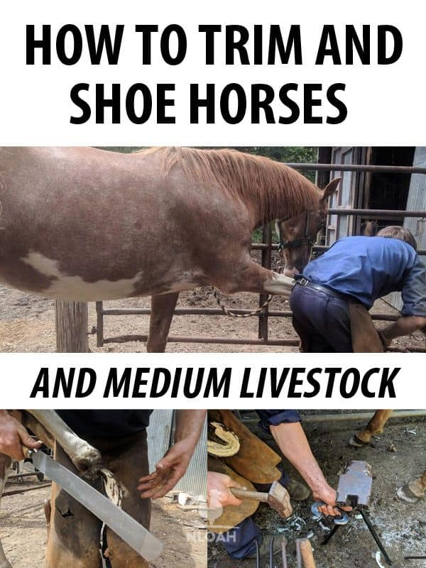 how to shoe a horse pinterest