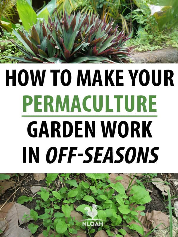 off season permaculture pinterest