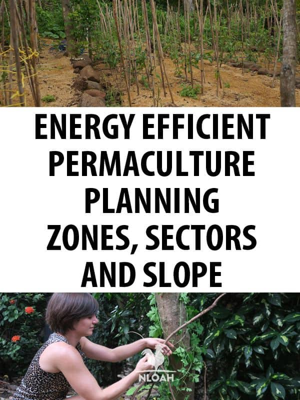 permaculture planning pinterest
