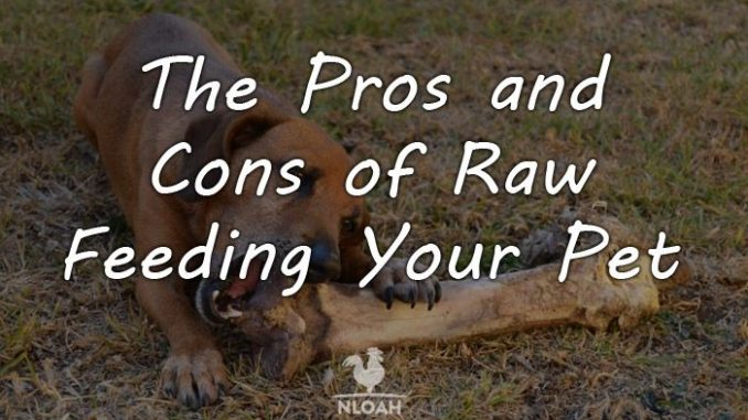 raw feeding pros cons logo