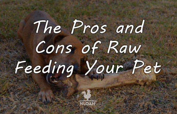raw feeding pros cons logo